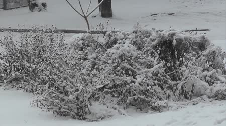 Bushes in the snow