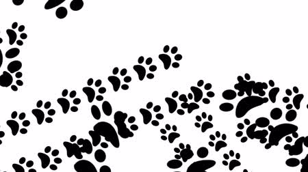 pursue : Paw prints animal feet foot footprints pawprints dog cat transition 4k