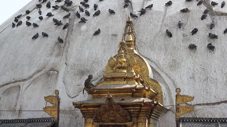 buddhista : The dome of the stupa with monkey and pigeons Stock mozgókép
