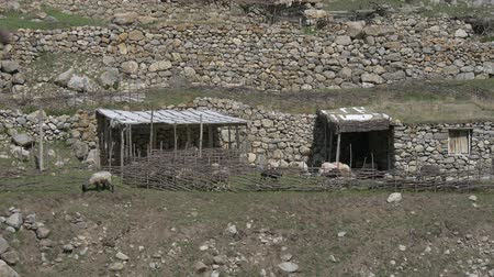 sheepfold : Cattle drive in the mountains