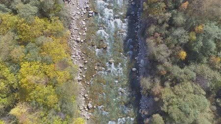 estreito : Top down view of fast moving river surrounded by forest