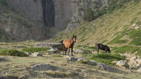 pastar : Horses in the background of a huge waterfall