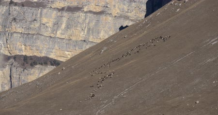 склон : Flock of sheep on the slope of the mountain