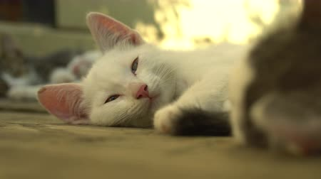 mourek : Sleepy kitten lying outdoors