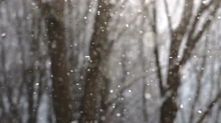 Snowflakes falling in slow motion with trees on the background Wideo