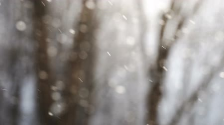 Big snowflakes falling in slow motion with trees on the background Wideo