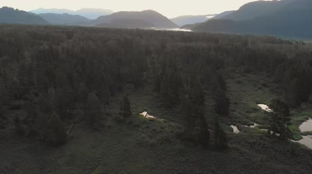 ingiliz columbia : Backwards aerial reveal of forest and wetlands during sunrise