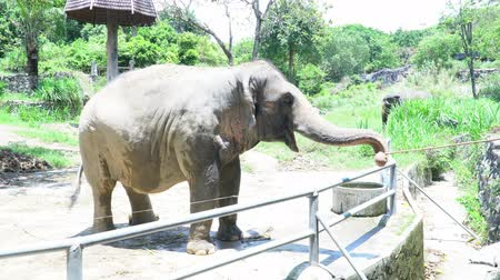 young elephants : feeds the Asia elephant in the zoo of Thailand