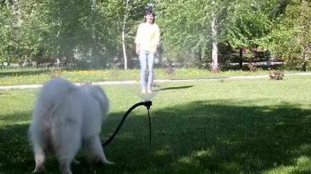 mouth watering : A white dog plays with a stream of water from a hose.