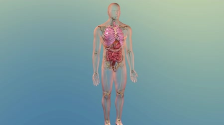 yöntem : Clogged Artery cholesterol plaque, 4k medical concept 3d animation. Red blood ce