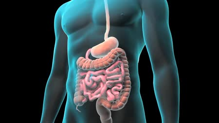 overcome : Anatomy of the human digestive system