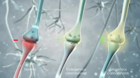 marijuana : The Endocannabinoid System (Ecs) And Action Of Thc Stock Footage