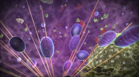 hijenik olmayan : The Microscopic World Of Cells