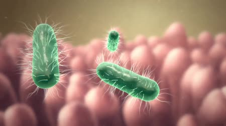 eu : Colony of a shigella sonnei bacteri 3