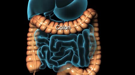 proces : 3D animation human digestive system Wideo