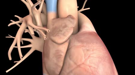 interno : Atrial Fibrillation 3D animation