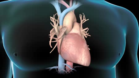 heart failure : Atrial Fibrillation Animation