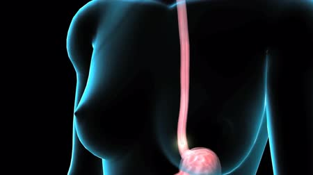 steril : 3D Animaton the female Esophagus Endoscopy. Esophagus channel seen from an endos