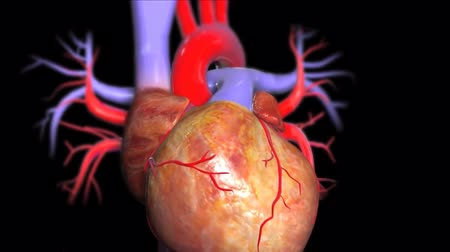 pompki : 3D medical animatied the human is beating hearth Wideo