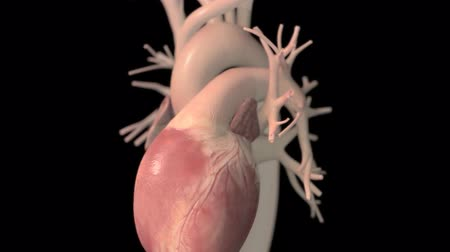 sem problemas : Human heart, realistic anatomy 3d model of human heart on the monitor, visual he