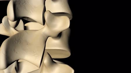 the inflammation : medical 3d animation of intervertebral discs