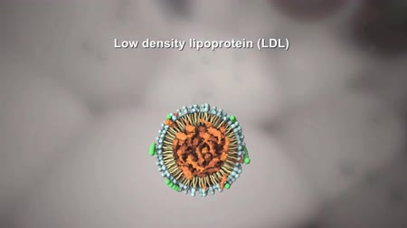 cholesterol : Low-Density Lipoprotein Stock Footage
