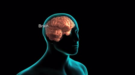 consciousness : The human brain
