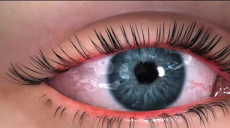 sc : eye anatomy 3d animation