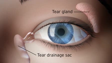 Łzy : tear gland animation