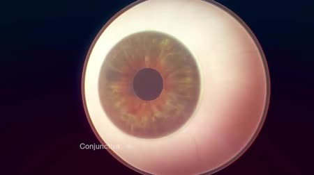 macula : Human Eye anatomy Stock Footage