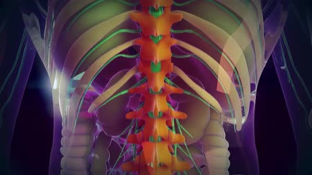inflamed : medical animation - spinal cord Stock Footage