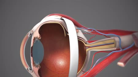 macula : 3D Animated Cataract surgery close-up Stock Footage