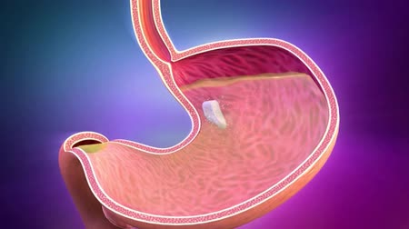 tápanyagok : 3D animation of human digestive system guts and stomach Stock mozgókép
