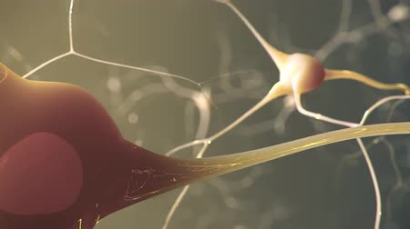 nervous system : Journey through a neuron.