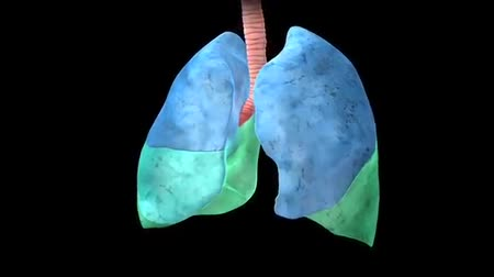 rendes : 3D Animation Human Lungs