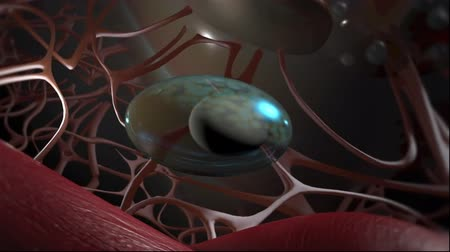 mhc : Animation Focus on Immunology of the lung Stock Footage