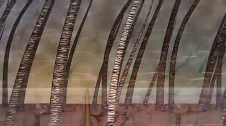 stomache : Animation of hair skin follicle,