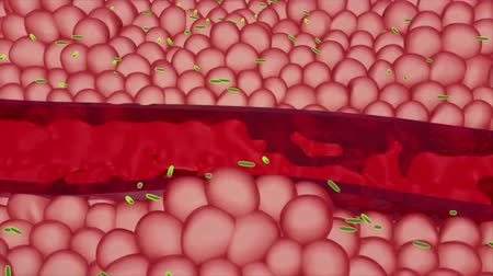 bloodcell : Red Blood Cells In An Artery