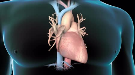 fisiologia : 3D animation of Human heart Vídeos