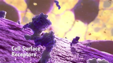 electron : Lymphocyte Generates Antibodies Stock Footage