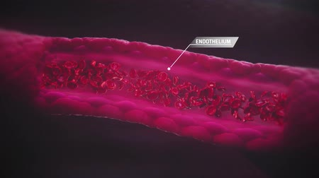 cura : Blood Cells Flow Through A Blood Vessel Hd