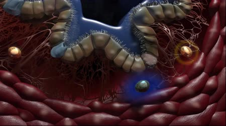 oncology : Animation Focus on Immunology of the lung Stock Footage