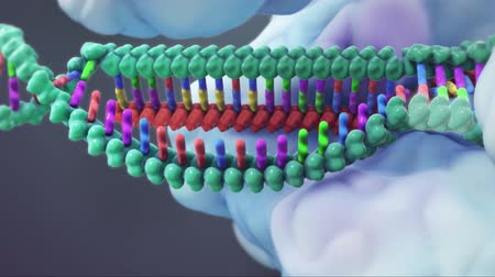 cromossoma : The genetic structure of 3D animated DNA