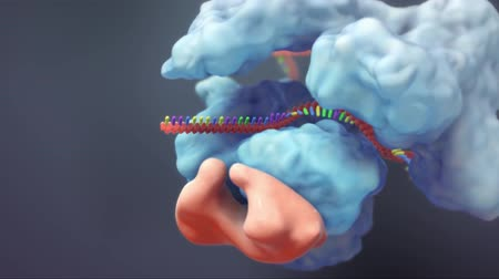 are you ready : The genetic structure of 3D animated DNA
