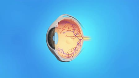 macula : 3D animation of the eye anatomy Stock Footage