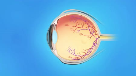 nerves : Human eye anatomy on blue background, The Vitreous