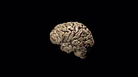 função : 3d animation of human brain in black background