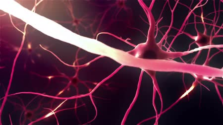 axon : Neurons, Neural Connections, Signal Transmission By Neurons Stock Footage