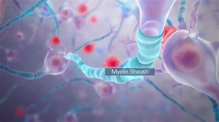axon : Neural transmission. Neuron receiving and transmitting an impulse Stock Footage