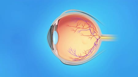 macula : 3D medical anatomy of an animated eye on blue background. Age Yellow spot disease.